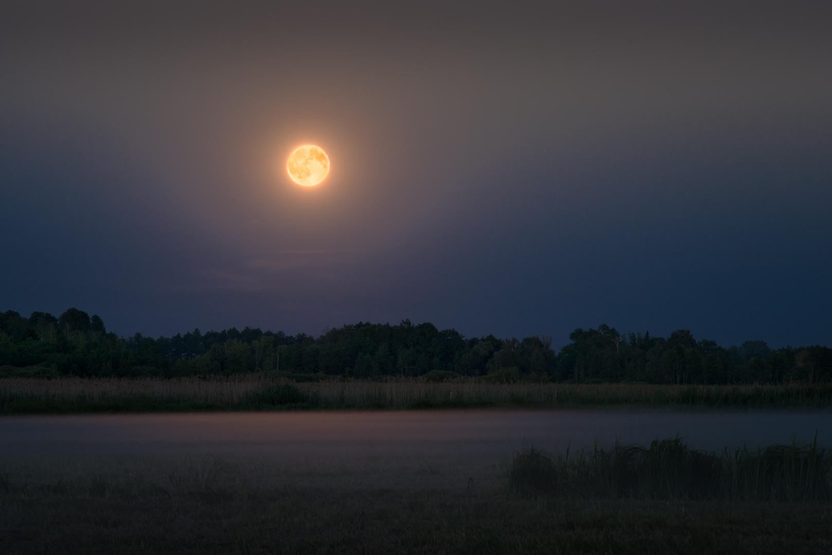 Moonrise in Białowieża