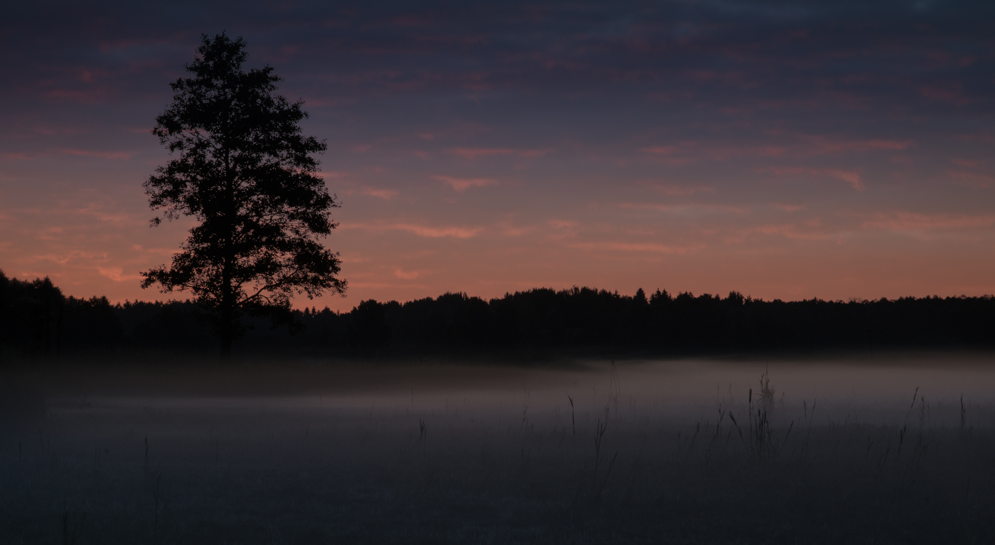 Sunset and fog in Białowieza