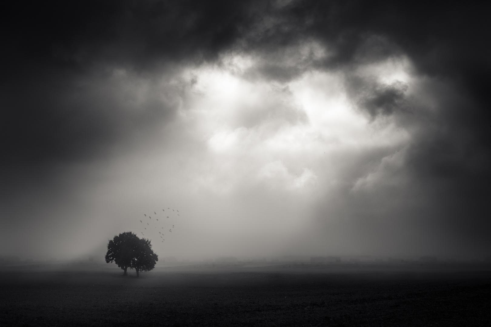 Pastures Grey